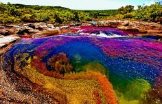 """Caño Cristales is a Colombian, is commonly called """"The River of Five Colors"""" or """"The Liquid Rainbow"""". It is the most beautiful river in the world. The most ideal time to visit Caño Cristales is from late July to early December. Beautiful Places To Visit, Oh The Places You'll Go, Cool Places To Visit, Places To Travel, Rainbow River, Les Continents, Colombia Travel, Strange Places, Amazing Nature"""