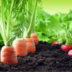 Gardening, raising farm animals, growing organic vegetables and fruit, DIY Projects, and natural healthcare with essential oils. Grow Organic, Plants, Garden, Growing Organic Vegetables, Fruit Trees, Outdoor Herb Garden, Permaculture Gardening, Vegetable Seed, Garden Plants