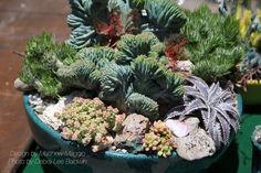 Why Cactus is Popular | Debra Lee Baldwin Black Succulents, Planting Succulents, Lee, Moisturizer For Dry Skin, Plant Decor, Face And Body, Garden Landscaping, Indoor Plants, Garden Design