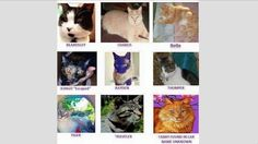 Petition · Put Vicious Cat Killer Robert Farmer Away · Change.org