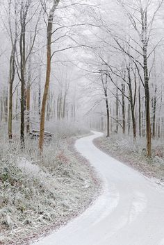 ✯ Winding Path through Frosty Trees