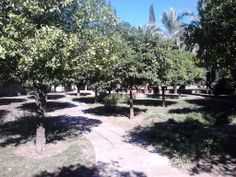 Trees - Arboles