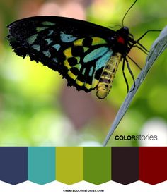 Flutterby | Color Stories™   Happiness is a butterfly, which when pursued, is always just beyond your grasp | createcolorstories.com.   Color palettes to inspire your next creative endeavors! Get full HEX colors on the blog!  #colorpalette #colour #designtools #butterfly #createcolorstories #flutterby #colorscheme #colortheme #colorstories #happiness #creativecolors #colorstoriesblog