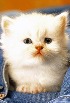 What A Cutie! - Click to see loads of great pictures of cats and kittens to brighten your day.