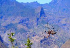 #gotoreunion #spider #nature #flashback #lareunion by mcmary_
