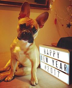 Happy New Year from our special new friend and #reservoirdogslondon #thierrythefrenchie #frenchbulldog #2017 #dogs #dogsofinsta #happynewyear 🎉🎈🐩
