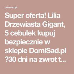 Super oferta! Lilia Drzewiasta Gigant, 5 cebulek kupuj bezpiecznie w sklepie DomiSad.pl ✔30 dni na zwrot towaru ✔ Profesjonalne pakowanie ✔ Wygodne sposoby płatności.
