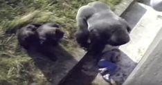 Poika putosi gorilla-aitaukseen eläintarhassa: Eläimen reaktio saa kaikki yllättymään. Newsner tarjoaa uutisia, joilla todella on merkitystä!
