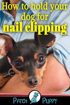 """Dog Care -Do you know how to hold your dog for nail clipping? Our post """"Nail Clipping tricks ensure you Never Clip a Quick Again!"""" covers this and some other awesome nail clipping tips and tricks Pet Dogs, Dogs And Puppies, Dog Cat, Mastiff Puppies, Trimming Dog Nails, Dog Muzzle, Cheap Pets, Black Lab Puppies, Dog Games"""