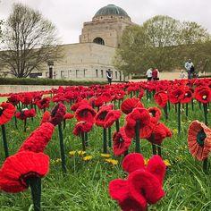 62 000 handmade poppies at the Australian War Memorial in Canberra, Australia.