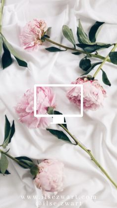 trendy flowers wallpaper for phone photography pink roses Phone Wallpaper Pink, Flowers Wallpaper, Trendy Wallpaper, Pretty Wallpapers, Flower Backgrounds, Aesthetic Iphone Wallpaper, Phone Backgrounds, Vintage Backgrounds, Floral Wallpapers