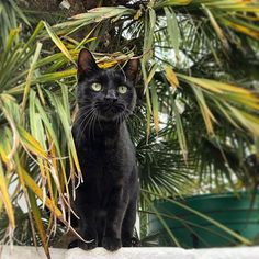 Haven't posted in a while so here is a pic of Bon the jungle cat. Jungle Cat, Panther, Cats Of Instagram, Inspirational, Animals, Animales, Animaux, Panthers, Animal