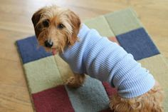Easy upcycled dog sweater ~ http://www.thehobbyroomdiaries.com/2012/08/technique-of-week-easy-little-dog.html