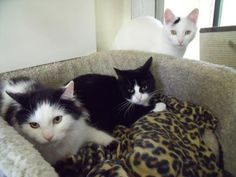 YORK RSPCA ANIMAL HOME :: Bracken, Bramble and Brook