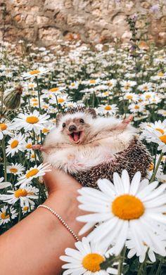 Always be happy - Animals