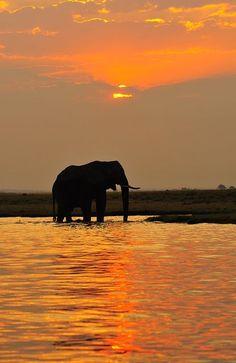 Sunset in Chobe National Park, Botswana **