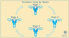 How Your Menstrual Cycle Affects You Each Week, Or What To Expect When You're Not Expecting