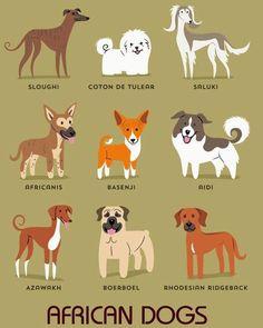 Dogs Of The World: AFRICA: Sloughi (North Africa), Coton De Tulear (Madagascar), Saluki (Egypt), Africanis (South Africa), Basenji (Congo), Aidi (Morocco), Azawakh (Morocco/Tunisia), Boerboel (South Africa), Rhodesian Ridgeback (Rhodesia).