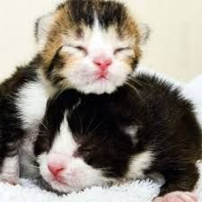 Cute Kittens That Can Barely Open Eyes To Think How Helpless