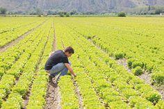 La Commissione europea ha confermato oggi la proroga del termine di presentazione delle domande Pac e Psr 2016 al 15 giugno. Il Commissario all'Agricoltura Phil Hogan ha sottolineato che la...