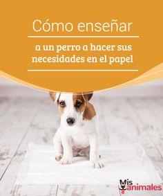 Cómo enseñar a un perro a hacer sus necesidades en el papel  Enseñar a un perro cachorro a hacer sus necesidades en un papel de periódico es una tarea en la que deberás invertir tiempo, paciencia y cariño.  #Consejos #Cachorro #Necesidades #Paciencia