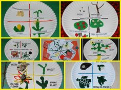 Life Cycle Crafts for #Preschool and #Kindergarten - Corn, Apple, Sunflower, Pumpkin, Parts of a Plant, Poinsettia, and Sea Turtle