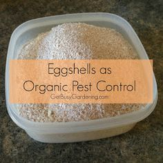 Eggshells as Organic Pest Control. Funny, I've been freezing my egg shells all winter to use for calcium to prevent blossom end rot.