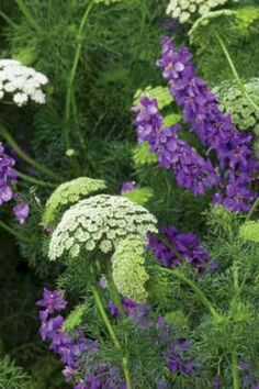 My Favorite Plant Combinations 51