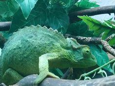 Kameleonttien persoonat – Maanantaikappale Turtle, Turtles, Tortoise Turtle, Tortoise