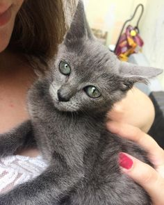 Quando a gatinha é tão linda e meiga que dá vontade de levar pra casa  . Eu tenho seis gatos e duas cachorrinhas em casa ou seja não dá pra entrar mais nenhum rs . A foto é minha            #cats #gatos #cat #catsofinstagram #gatosdeinstagram #veterinarian #medvet #veterinaria #medveterinariabr #veterin #gato #instacat #medicinaveterinaria #catlovers #medvetlife #catstagram #vet #veterinary #vetstudent #catlover #gatoslindos #vetmed #veterinarymedicine #gatosfofos #veterinarians…