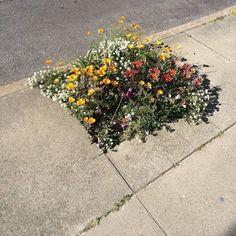 Urban Garden Gorilla gardening in sidewalk space - We like small details. Pretty Flowers, Wild Flowers, Bouquet Flowers, Flowers Nature, Fresh Flowers, Flora Flowers, Art Flowers, Plants Are Friends, Land Scape