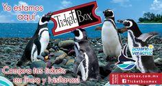 Compra en linea tus tickets, para visitar el pinguinario en el Acuario de Veracruz.