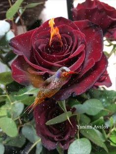 Floral Wallpaper Iphone, Rose Flower Wallpaper, Live Wallpaper Iphone, Neon Wallpaper, Beautiful Flowers Pictures, Beautiful Rose Flowers, Beautiful Gif, Beautiful Birds, Roses Gif
