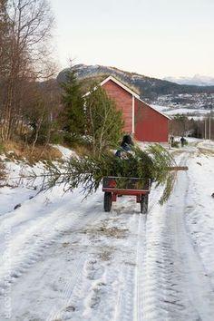 Bringing home the tree...God Jul http://www.svenngaarden.com/2012/12/god-jul.html?m=1