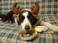Reindeer what!