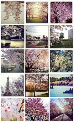 We asked our Instagram followers to send us their Cherry Blossom photos - check out the explosion of #TCSpringFling!