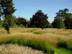Trentham Gardens Piet Oudolf's Rivers of Grass, via Flickr.