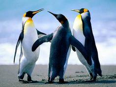 Penguins (12 pieces)