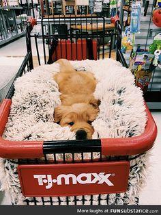 puppies sleeping through the night . puppies sleeping together . puppies sleeping in bed . Super Cute Puppies, Baby Animals Super Cute, Cute Baby Dogs, Cute Little Puppies, Cute Dogs And Puppies, Cute Little Animals, Cute Funny Animals, Doggies, Tiny Puppies