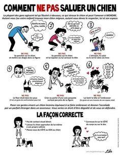 comment saluer un chien