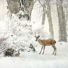 Woodland Creatures - christmas card design by Jane Crowther, Bug Art