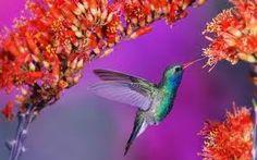 world most beautiful bird - Google Search