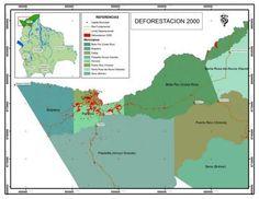 Bolivia: La falacia de la certificación forestal y la sostenibilidad de los bosques