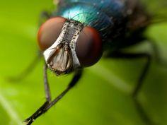 Científicos logran controlar el cerebro de una mosca mediante láseres