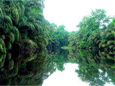 Costa-Rica-Tortugerro-National-Park-thumb-520x3911-480x360.png (480×360)