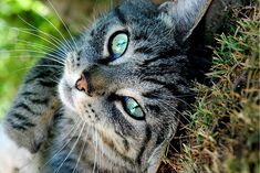 beautiful tabby...miss my Devil Kitty.  Well really, all of my kitties.