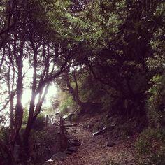 A walk in the rain towards Triund Hill  #iphone #photography #instapics #mcleodganj #himalayas #instahimachal #instadaily #nature #trekking