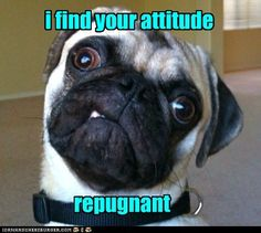 I bet this is what Alice's pug heritage looks like. We've decided there are two types of pugs: those that look like lions and those that look like frogs. Alice is frog-pug. Funny Dog Memes, Funny Dogs, Funny Animals, Cute Animals, Funny Puppies, Animals Dog, Animal Memes, Pug Quotes, Pug Dogs