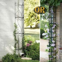 Decorate your outdoor drain pipes by planting those beautiful climber plants.