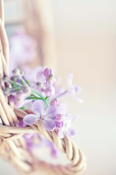 Soft tone ~ flowers
